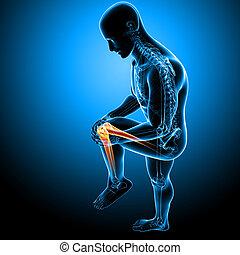 3d rendered Illustration of Male knee pain anatomy on blue