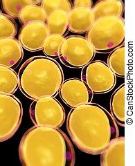 fat cells - 3d rendered, medical illustration of some fat...