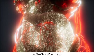 3d rendered medically accurate animation of heart and blood vessels