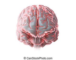 a glowing human brain