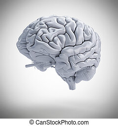 3d rendered medically accurate illustration of a human brain