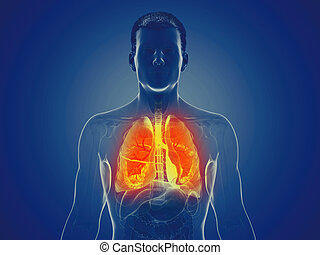 a mans lung - 3d rendered medically accurate illustration of...