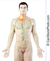 a mans lymphatic system cancer