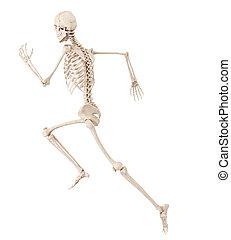 a running skeleton