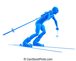 a skier - 3d rendered medically accurate illustration of a...