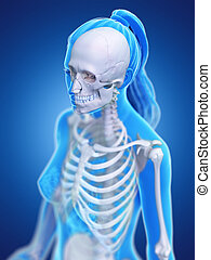 a womans skeletal thorax - 3d rendered medically accurate...