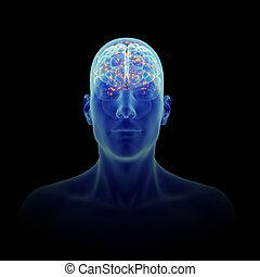 an active brain