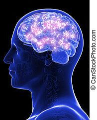 an active human brain