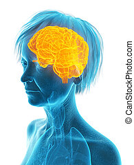 an elder females brain