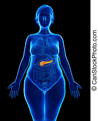 an obese womans pancreas - 3d rendered medically accurate...