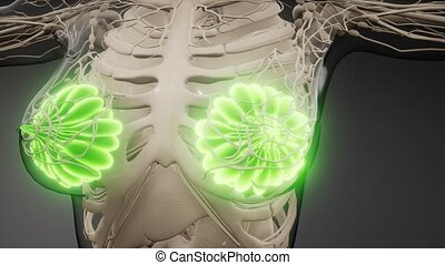 3d rendered medically accurate illustration of an obese womens mammary glands