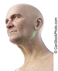 3d rendered medically accurate illustration of an old mans lymph nodes of the neck
