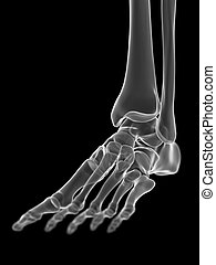 the ankle joint - 3d rendered medically accurate ...