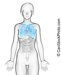 the female lung