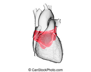 the left atrium - 3d rendered medically accurate ...