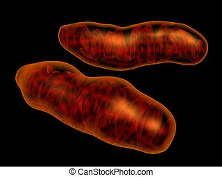 3d rendered mitochondria isolated on black. Mitochondria is intracellular organel responsible for energy transformation