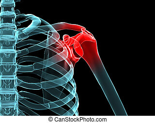 3d rendered x-ray illustration of a human highlighted shoulder