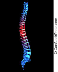 3d rendered x-ray illustration of a human highlighted spine
