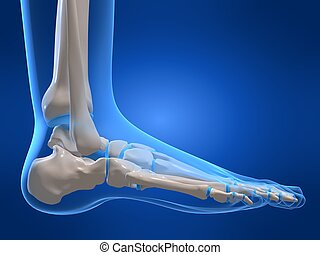 skeletal foot - 3d rendered x-ray illustration of a human...