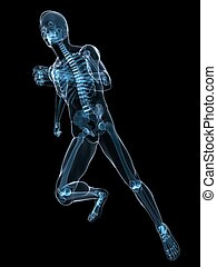 running skeleton - 3d rendered x-ray illustration of a...