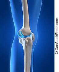 skeletal knee - 3d rendered x-ray illustration of human...