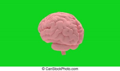 3d rendering animation of a turning brain isolated on green screen