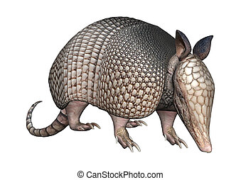 3D Rendering Armadillo on White