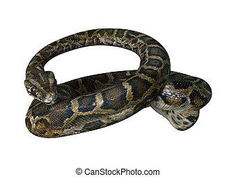 3D Rendering Burmese Python on White - 3D rendering of a...