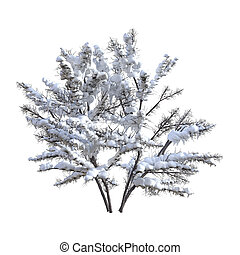 3D Rendering Bush Under Snow on White