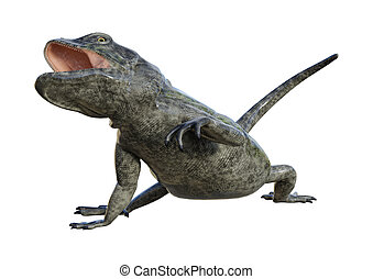 3D Rendering Chuckwalla on White
