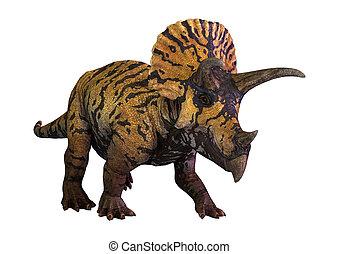 3D Rendering Dinosaur Triceratops  on White
