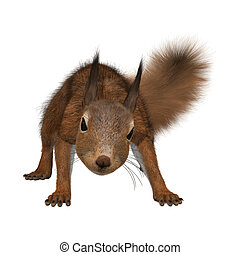 3D rendering of an European red squirrel isolated on white background