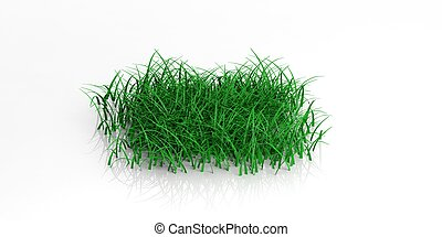 3d rendering grass on white background