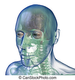 head x_ray perspective view