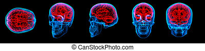 3D rendering human brain X ray