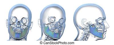 3d rendering illustration of jaw bone