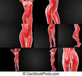 3D rendering illustration of the human anatomy