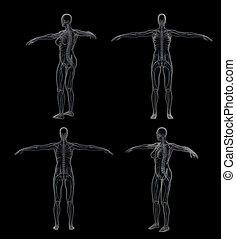 3D rendering illustration of the nervous system