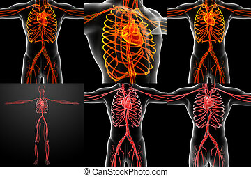 3D rendering illustration of the  vascular system