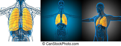 3d rendering medical illustration of the lung