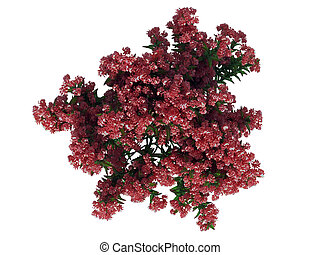 3d rendering of a flower bush from top view isolated on white