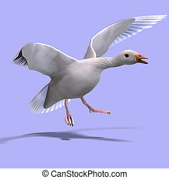 flying snow goose - 3D rendering of a flying snow goose with...