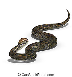 royal python - 3D rendering of a royal python with clipping ...