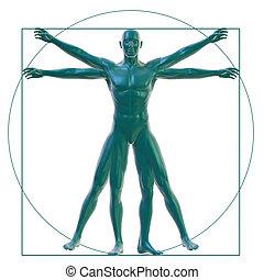 Vitruvian man on white - 3D Rendering of a Vitruvian man on ...