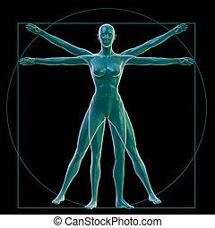 Vitruvian woman on black - 3D Rendering of a Vitruvian woman...