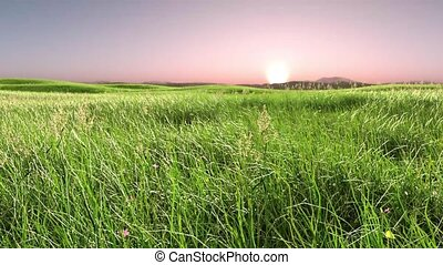 3D rendering of grassland