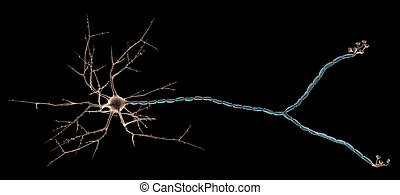 Multipolar Neuron - 3D rendering of Multipolar Neuron in the...