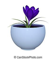 3D Rendering Purple Crocus on White
