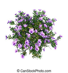 3D Rendering Rhododendron on White