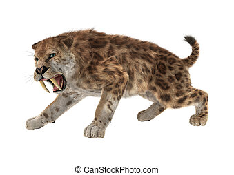 3D Rendering Saber Tooth Tiger on White - 3D rendering of a...